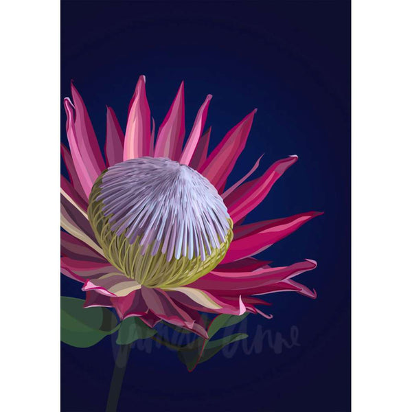 Dark King Protea (Limited Edition)