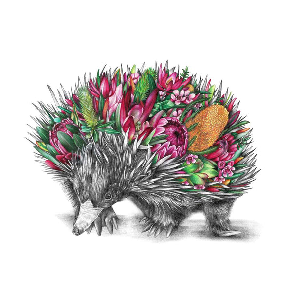 Eddie the Echidna by McMurtrie Illustrations. Australian Art Prints. Green Door Decor.  www.greendoordecor.com.au