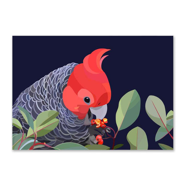 Gang-Gang Cockatoo (Limited Edition)