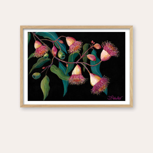 Glorious Gum Blossoms Fine Art Print - framed - by Daniela Fowler Art. Australian Art Prints. Green Door Decor. www.greendoordecor.com.au