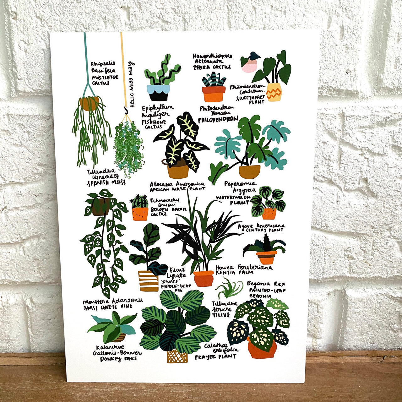 Hello Plant Lover Guide II print, by Hello Miss May. Australian Art Prints. Green Door Decor. www.greendoordecor.com.au