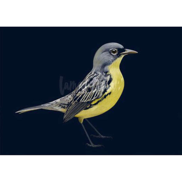 Kirtland's Warbler (Limited Edition)