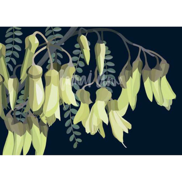 Kowhai (Limited Edition)
