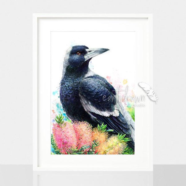 Magpie and Bottlebrush print, by Earthdrawn Studio. Australian Art Prints. Green Door Decor. www.greendoordecor.com.au