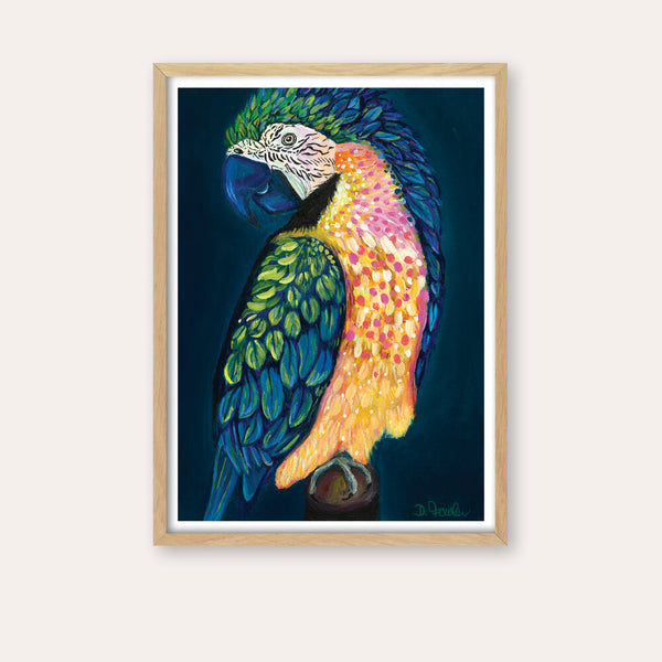 Maverick the Macaw Fine Art Print - framed - by Daniela Fowler Art. Australian Art Prints. Green Door Decor. www.greendoordecor.com.au