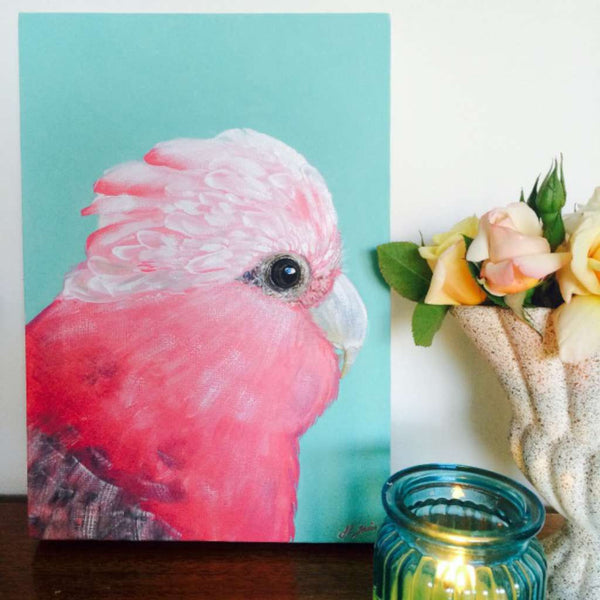 Molly the Australian Galah