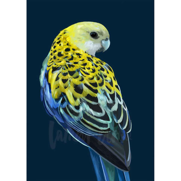 Pale Headed Rosella (Limited Edition)