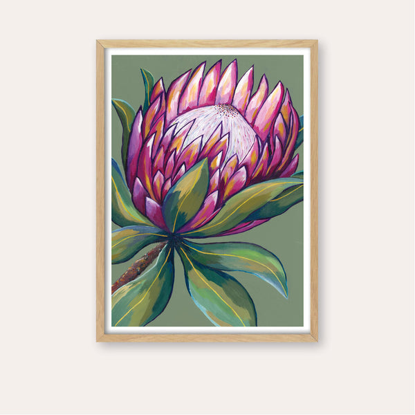 Pink Protea Fine Art Print - framed - by Daniela Fowler Art. Australian Art Prints. Green Door Decor. www.greendoordecor.com.au