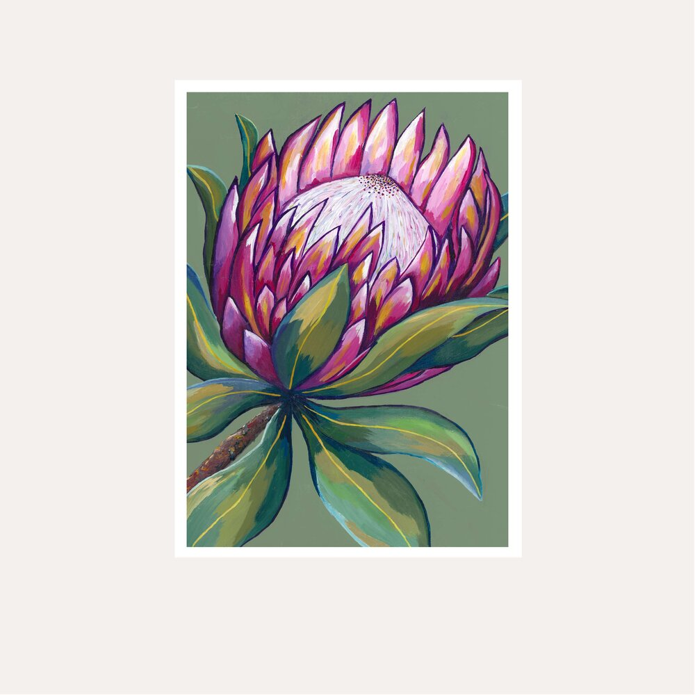 Pink Protea Fine Art Print - unframed - by Daniela Fowler Art. Australian Art Prints. Green Door Decor. www.greendoordecor.com.au