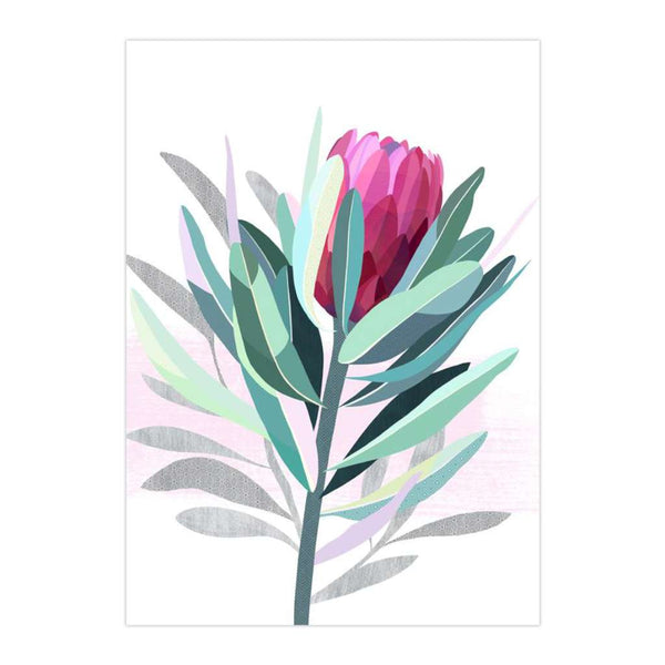 Protea (Limited Edition)