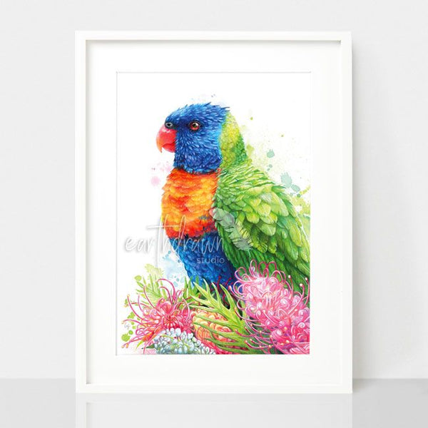 Rainbow Lorikeet and Grevilleas, by Earthdrawn Studio. Australian Art Prints. Green Door Decor.  www.greendoordecor.com.au