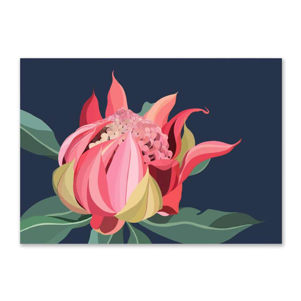 Waratah Bloom (Limited Edition)