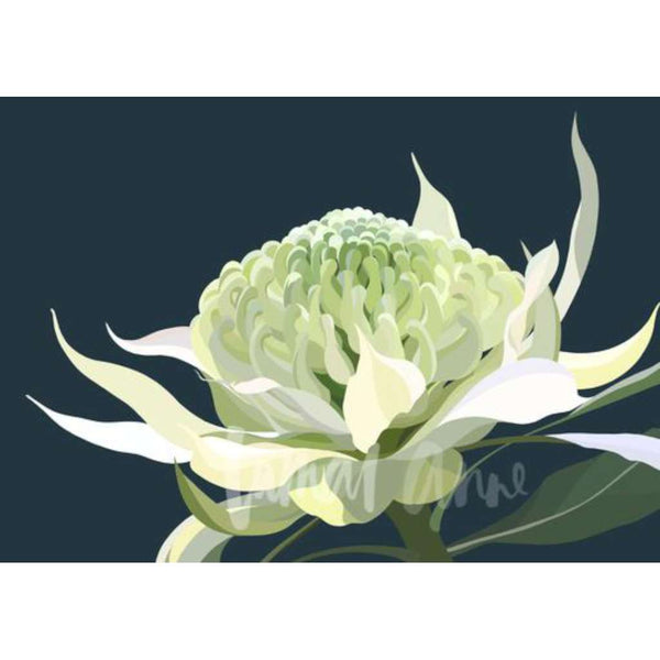 White Waratah (Limited Edition)
