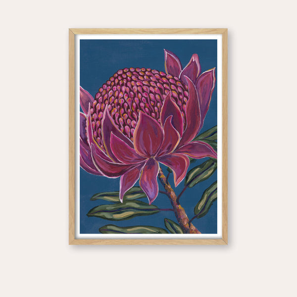Wicked Waratah Fine Art Print - framed - by Daniela Fowler Art. Australian Art Prints. Green Door Decor. www.greendoordecor.com.au