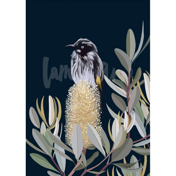 New Holland Honeyeater in a Banksia Tree print, by Lamai Anne. Australian Art Prints. Green Door Decor. www.greendoordecor.com.au