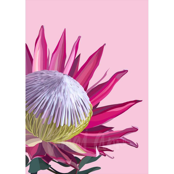 Pink King Protea (Limited Edition)