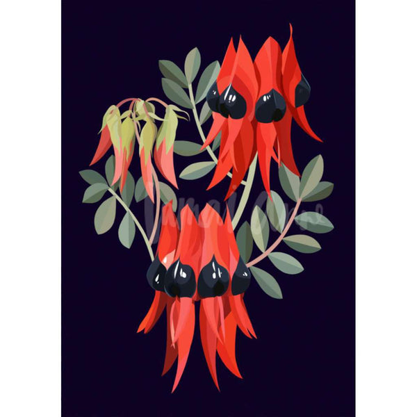 Sturt's Desert Pea on Navy print, by Lamai Anne. Australian Art Prints. Green Door Decor. www.greendoordecor.com.au