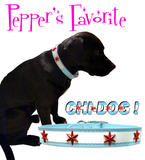 "Pepper's Choice - CHI DOG Chicago Flag Soft Leather Buckle Collar with Four Chicago Star Conchos 8"" - 23"""