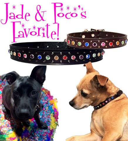 "Jade & Paco's SWAROVSKI PUNCH BLING Leather Buckle Collar 12""-16"""