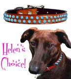 "Helen's Acrylic TURQUOISE MOUNTAIN Leather Buckle Collar 12"" - 26"""