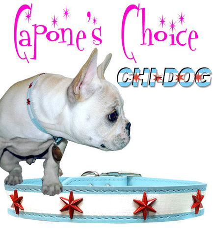 "Capone's Choice - CHI DOG Chicago Flag Soft Leather Buckle Collar with Four Chicago Star Conchos 8"" - 23"""