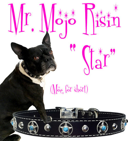 "Mr. Mojo Risin Rope Star & Turquoise Stitched Leather Clip Collar 17""- 26"""