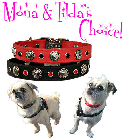 "Mona & Tilda's Mash Up ... SPORTs CONCHO and SWAROVSKI Poly Clip Collar 13""- 16"""