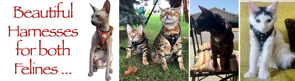 Harnesses for both felines …