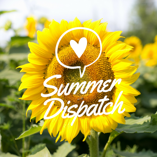Summer Dispatch Changes