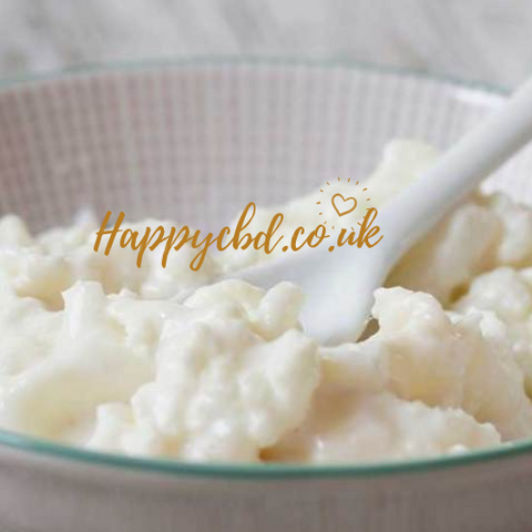 Premium Quality Live Milk kefir grains