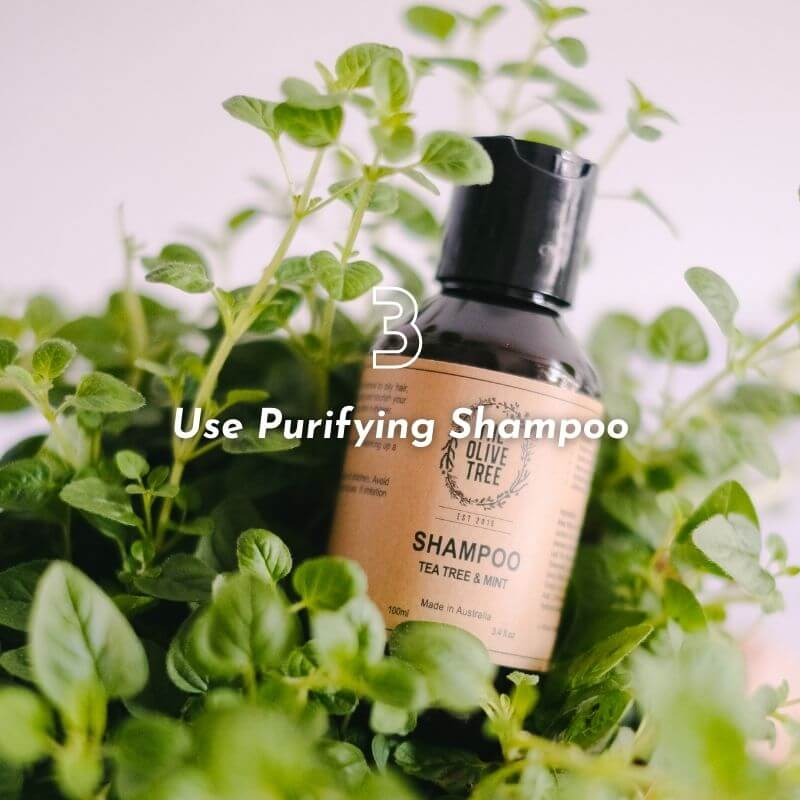 The Olive Tree Natural Sulphate Free Shampoo Conditioner