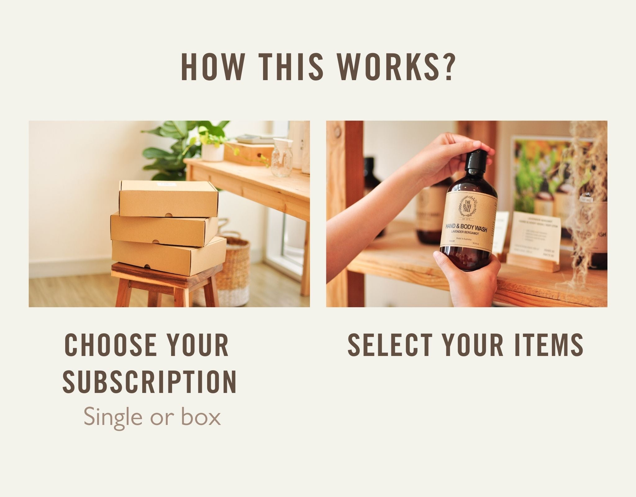 The Olive Tree Subscription How this Works