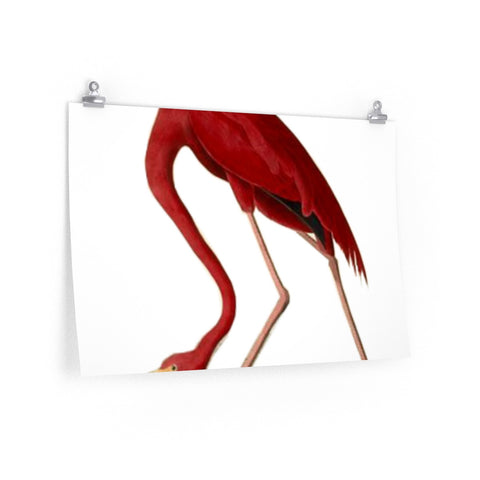 Posters with Pink Flamingo Art Print