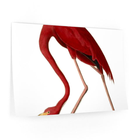 Wall Decals with Pink Flamingo Art Print