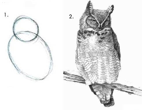 Draw the Owl