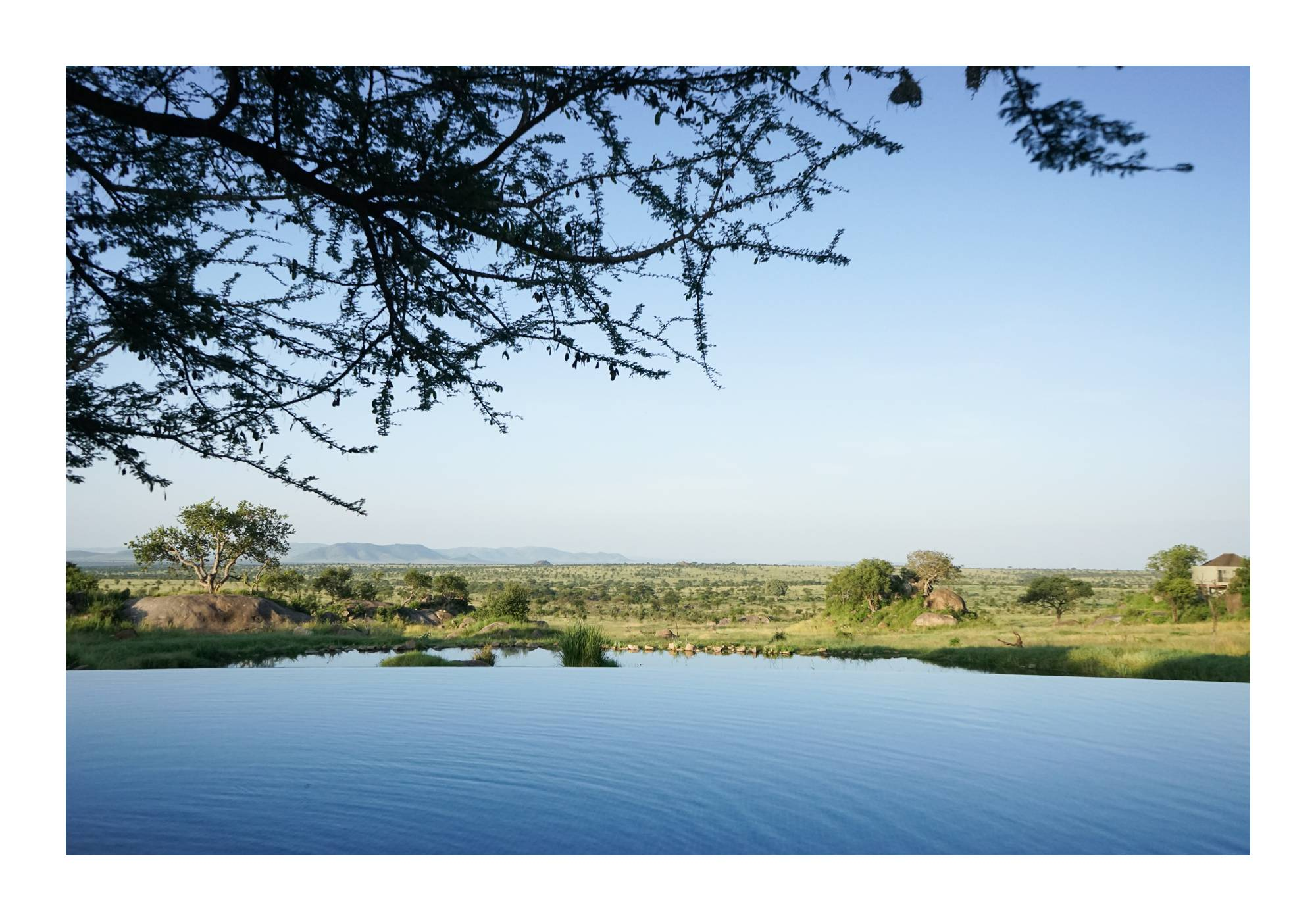 View of Serengeti with pool