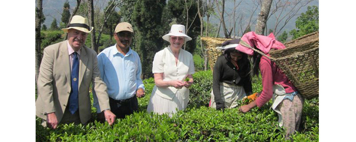 Gurkha Tea Farm Nepal