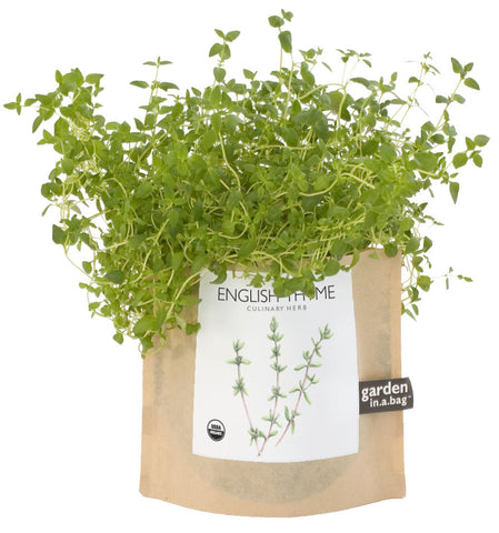 Organic Grow Kit-  English Thyme Garden In A Bag