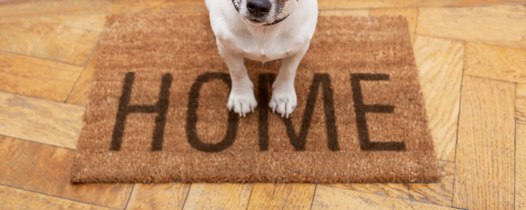 Welcome home: The best rug pads for entryways, hallways, and high-traffic areas