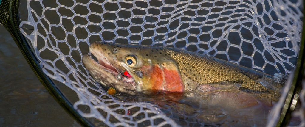 3 Tips for Locating Trout