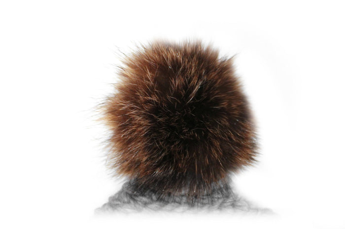 Le pompon de chat sauvage / The Raccoon Pompom