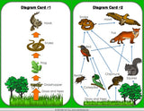 Food Chains and Food Webs Board Game - Games 4 Gains  - 4