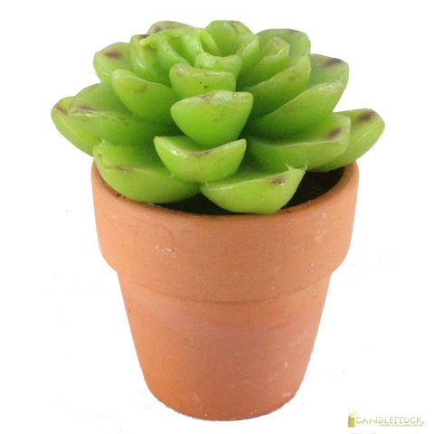 Green Succulent Candle In Terracotta Pot