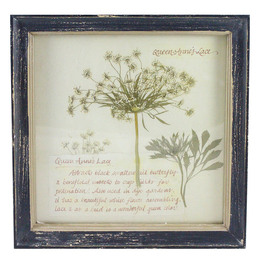 Rustic Wood Framed Queen Anne's Lace Pressed Flower Wall Decor