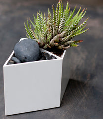 Single white Rhombin with stone and succulents