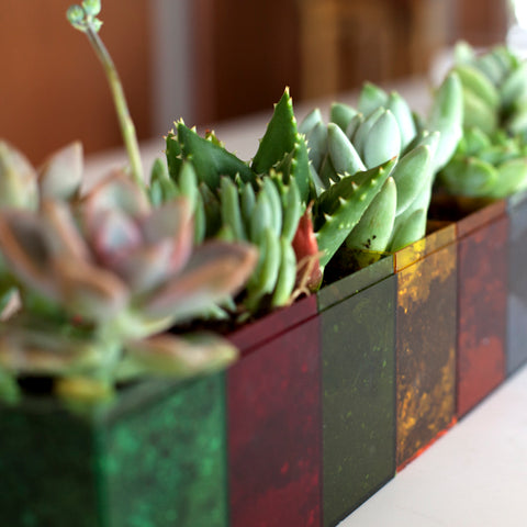 Succulents planted in colored 100C boxes