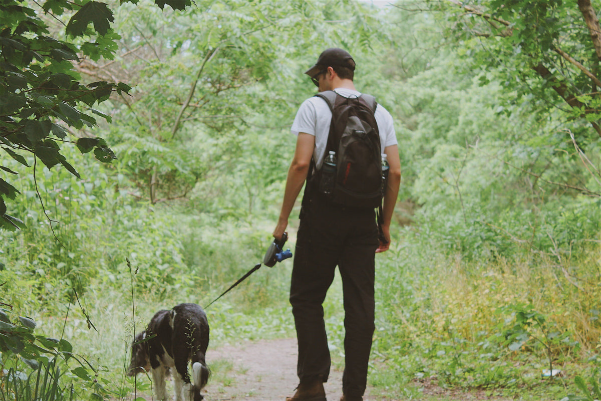 Hiking with Your Dog. The essential guide. | Loyal Canine Co.