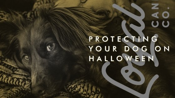 Protecting your dog on Halloween
