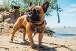 Taking your dog to the beach. What you should know.