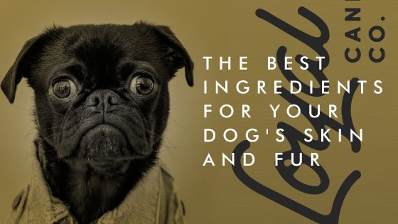 The best ingredients for your dog's skin and fur